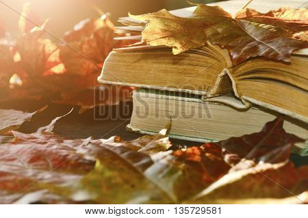 Autumn still life -old books among the autumn leaves under bright sunlight. Focus at the book's spine.