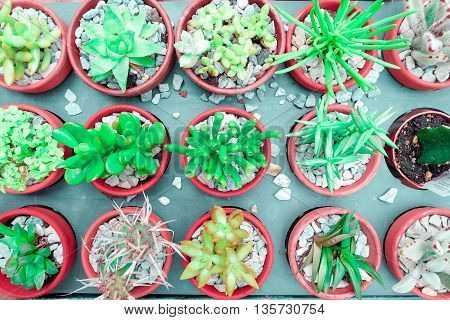 small various green cactus and succulent plant in pink rose red flower pot. top view - flat lay - Color tone.
