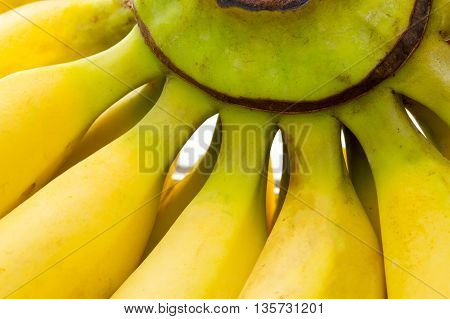 Close Up On Bananas With Stem Visible