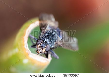 Macro head shot of a house fly nibbling on a plant with detailed eyes and facial features.