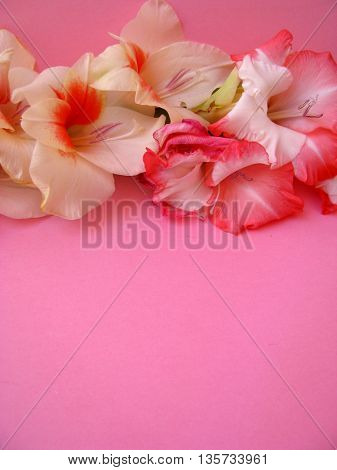 beautiful flowers placed on pink background
