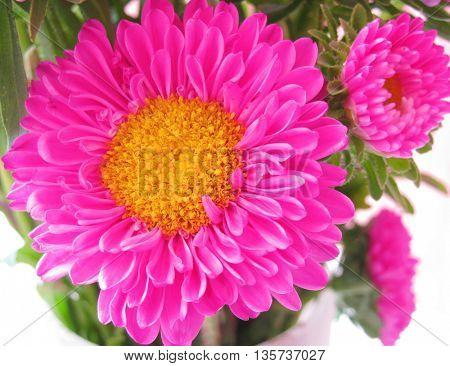 Beautiful pink fresh flowers