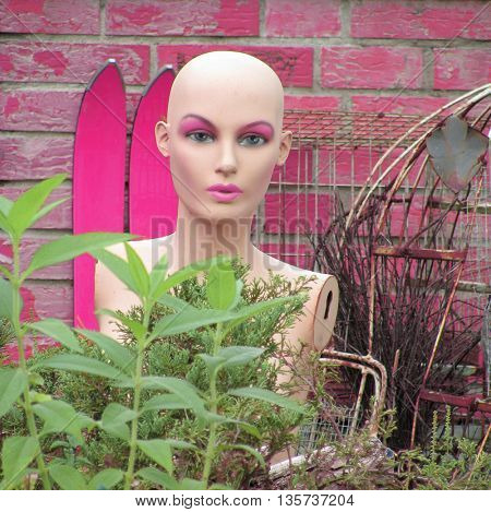 Doll in a bush