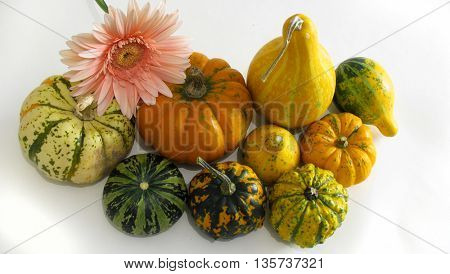 Group of colorful pumpkins and flower isolated on white background