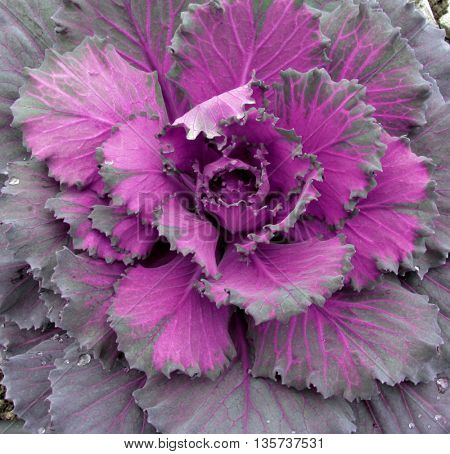 Beautiful purple plant