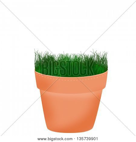 Pot with small plant