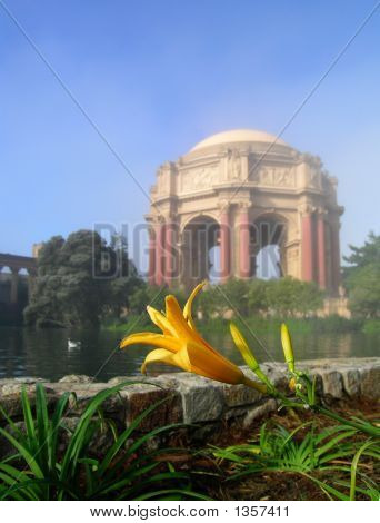 Close-Up Of Lily At The Palace Of Fine Arts