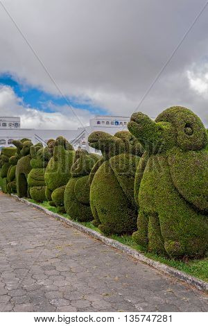 The Main Attraction In Tulcan Ecuador South America Is The Topiary Garden Cemetery Where Features Different Types Of Trees In A Variety Of Exotic Shapes