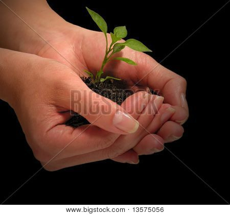 A photo of a woman holding a growing plant