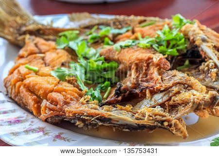 Close up Deep Fried Sea Bass With Fish Sauce (Pla Ga Pong Tod Nam Pla) in the plate decorate with coriander parsley leafs
