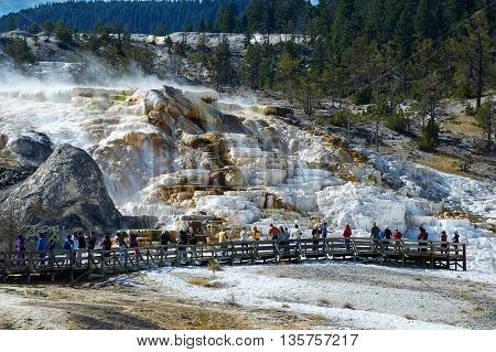 Minerva Terrace, Mammoth Hot Springs, Yellowstone, Wyoming, USA