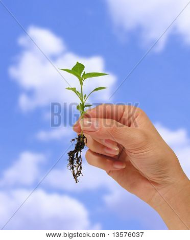 A photo of a woman holding a small plant