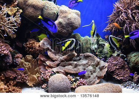 A photo of tropical fish in an aquarium