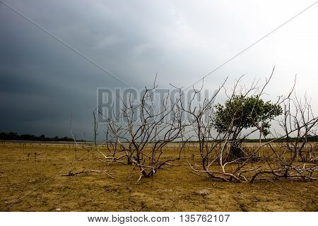 Background ground waiting for rain Nature .