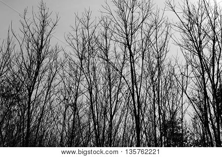 black and white branch of tree in winter