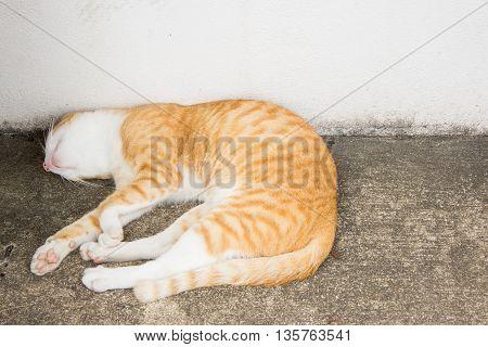The orange cat is sleeping on street