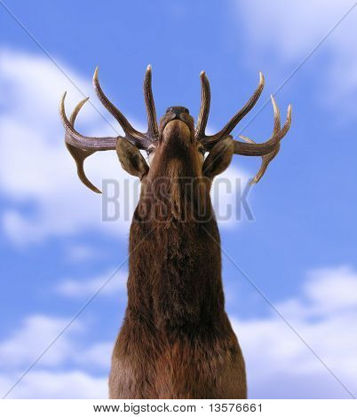 A photo of a buck from underneath
