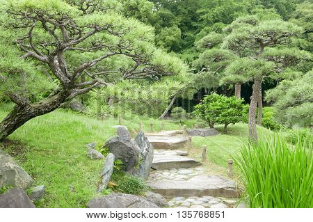 Pinus Thunbergii Trees, Stone Footpath And Staircases In Park