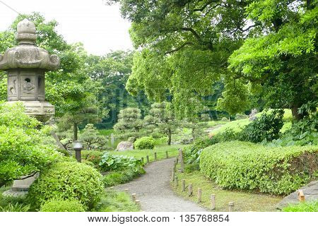 Pine Trees, Green Plants, Footpath In Japanese Zen Garden