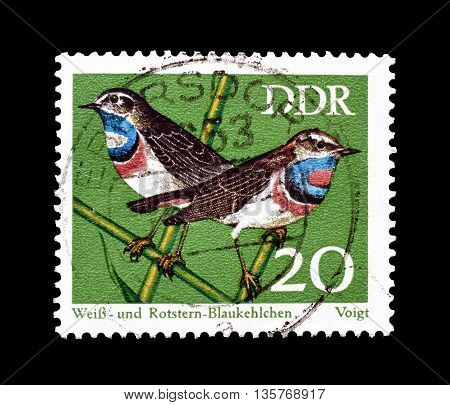 GERMAN DEMOCRATIC REPUBLIC - CIRCA 1973 : Cancelled postage stamp printed by German Democratic Republic, that shows White spotted and red spotted blue throats.
