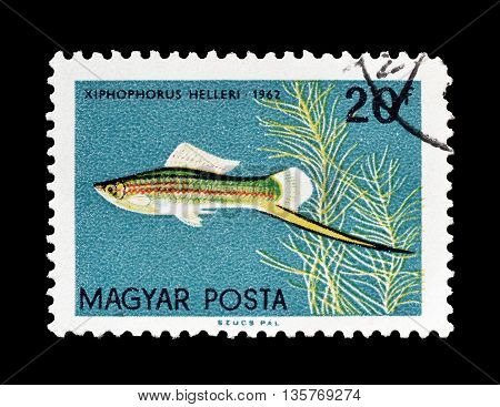 HUNGARY - CIRCA 1962 : Cancelled postage stamp printed by Hungary, that shows Swordtail fish.