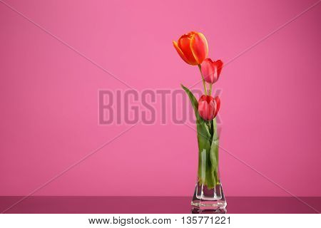 Art Three Tulip in Vase Isolated on Pink Background