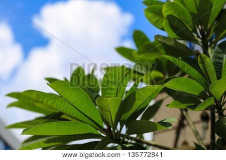 green leaf on white clouds blue sky background