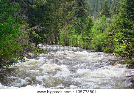 Fast Moving High River Water with Trees