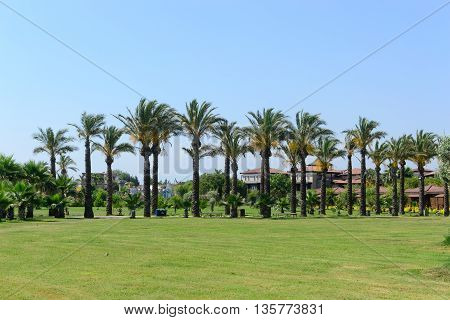 palm trees line sammer landscape horizontal photo