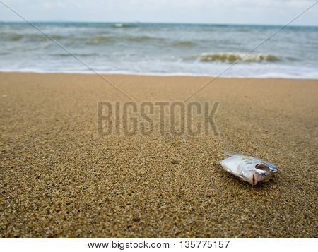 Small fish Dead on sand beach coastline