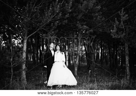 Lovely Wedding Couple  In A Pine Forest