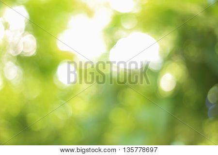 light green bokeh from big tree background