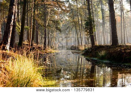 Tall old growth trees in dense forest reaching over calm stream as beautiful nature background scene