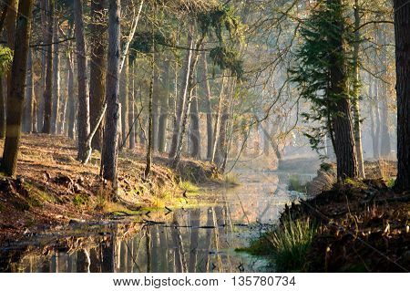 Calm waters reflecting trees in stream at sunset in forest as beautiful nature background scene
