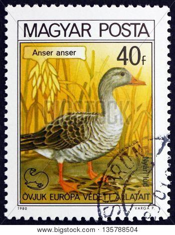 HUNGARY - CIRCA 1980: a stamp printed in Hungary shows Greylag Goose Anser Anser Bird circa 1980