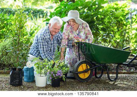 Happy senior couple planting in pots by wheelbarrow in garden