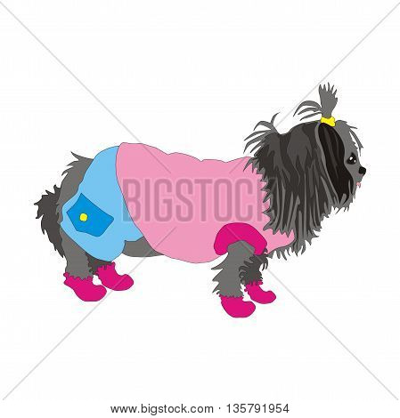 Illustration dog is wearing a tracksuit winter isolated on white background