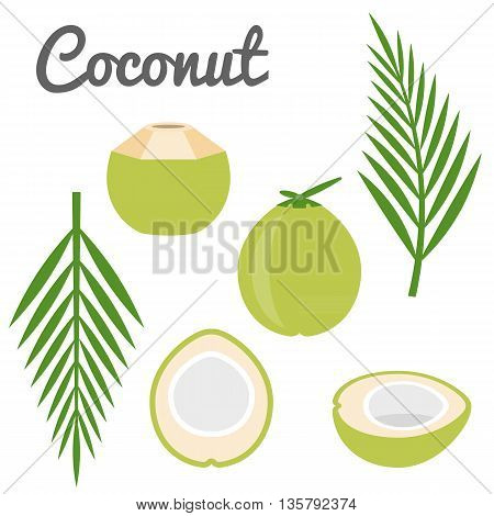 Vector coconut and coconut leaf set icon