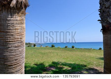 View of the sea between two palm trees in protaras beach cyprus island bottom to top view