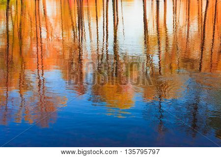 Reflection of Yellow Trees woods in Water During a autumn. Beautiful autumn background with reflection in river