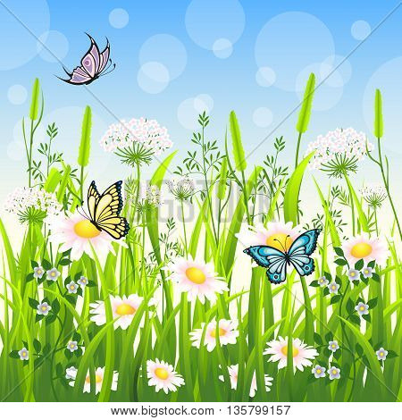 Flower meadow in summer with some butterfly