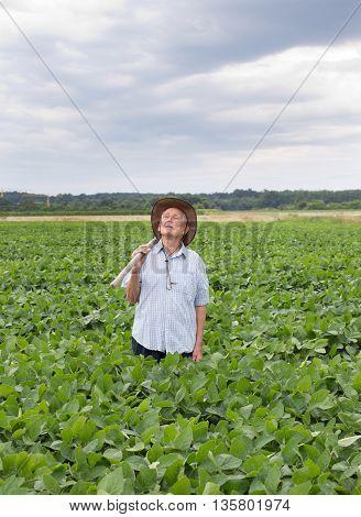 Senior Peasant In Soybean Field