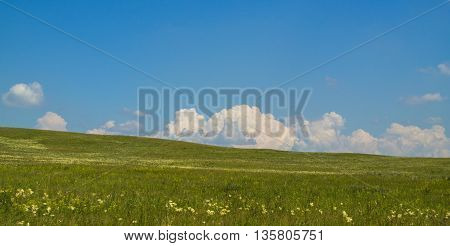 Beautiful green summer steppe, panorama, summer,  travel, serenity