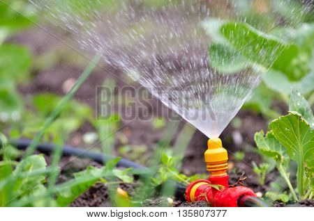Watering the plants from a watering can. Watering agriculture and gardening concept.