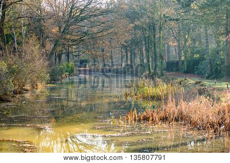 Misty forest surrounding little swamp with old structures hidden in the trees during the autumn season
