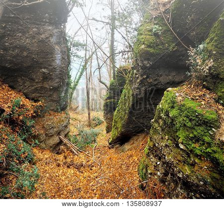 forest with rocks and leaves in the autumn mist