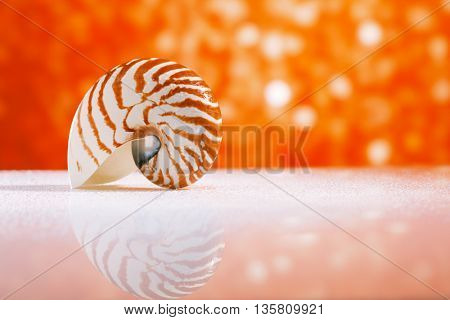 nautilus shell seashell with golden red glitter glass  and reflection