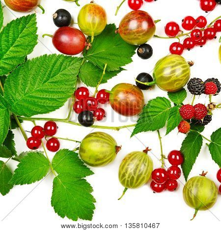 berries black and red currants gooseberries and blackberries isolated on white background