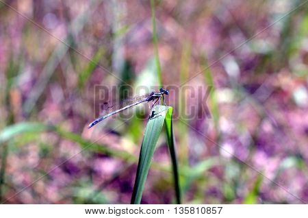 closeup of dragonfly insect sitting in plants
