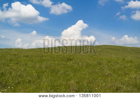 Beautiful green summer steppe, tourism, travel, serenity